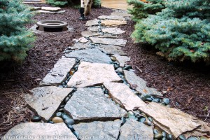 Stone path between pine shrubs and mulch