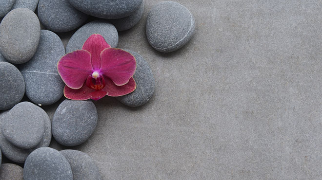 Flower blossom on smooth rocks