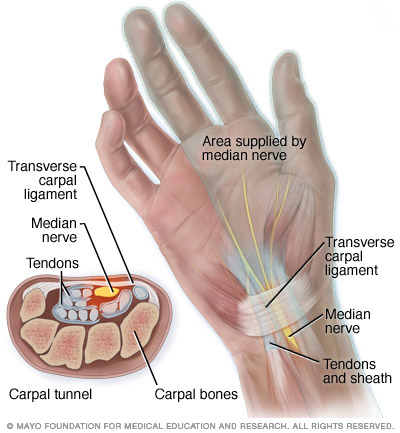 Carpal tunnel anatomy